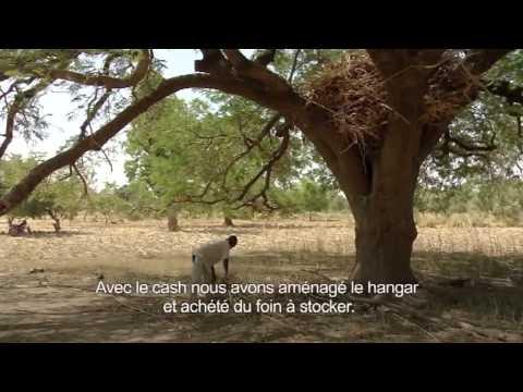 Renforcement de la résilience à travers le petit élevage de caprins et le cash