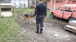 как научить собаку искать предметы