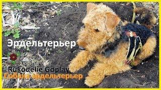 Собака эрдельтерьер в саду гнездо сделала себе Dog Airedale Terrier