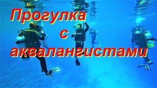 ЕГИПЕТ ДАЙВИНГ В ХУРГАДЕ. Рыбки Красного моря. Прогулка с аквалангистами.