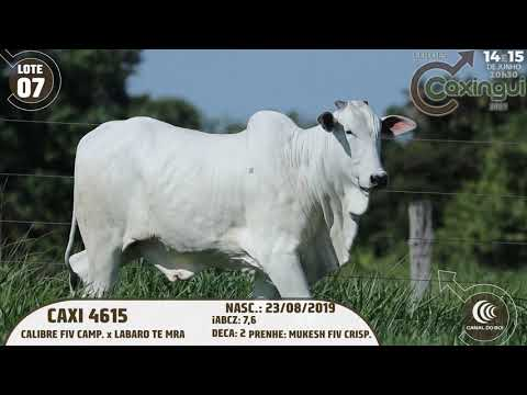 LOTE 07   CAXI 4615