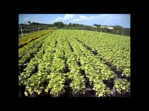Plant nurseries in miami fl