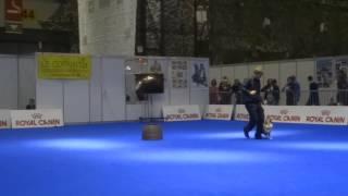 Dog Dance Salsa Plinio avec son Shelti