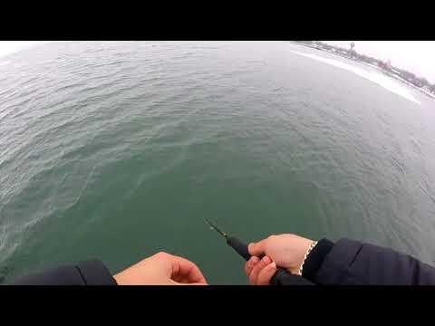 Steelhead Dunkirk Ny Fishing