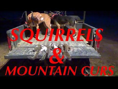 SQUIRREL HUNTIN' WITH MOUNTAIN CURS🐶🐶🐶 At Hollis Farms!!