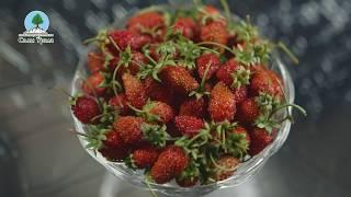 Как иностранцы пробовали уральские ягоды. Тест 1 - ЗЕМЛЯНИКА