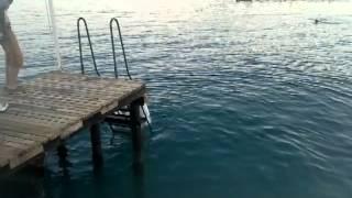 Прыжок жениха и невесты в море