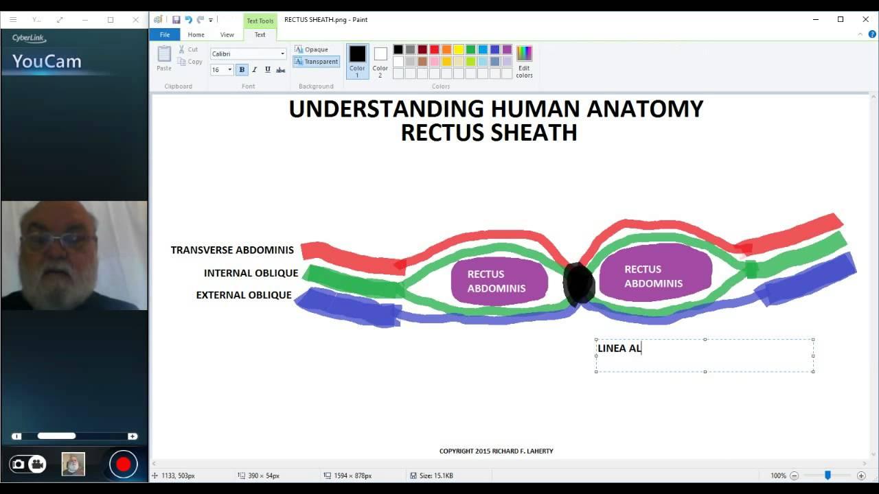 UNDERSTANDING HUMAN ANATOMY-ABDOMEN RECTUS SHEATH - YouTube