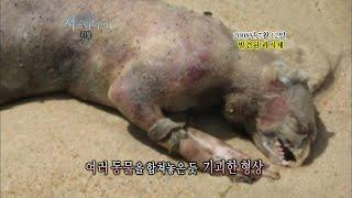 [서프라이즈] 몬탁 해변에서 발견된 정체불명의 괴물 사체! 미국 정부의 비밀실험 때문?