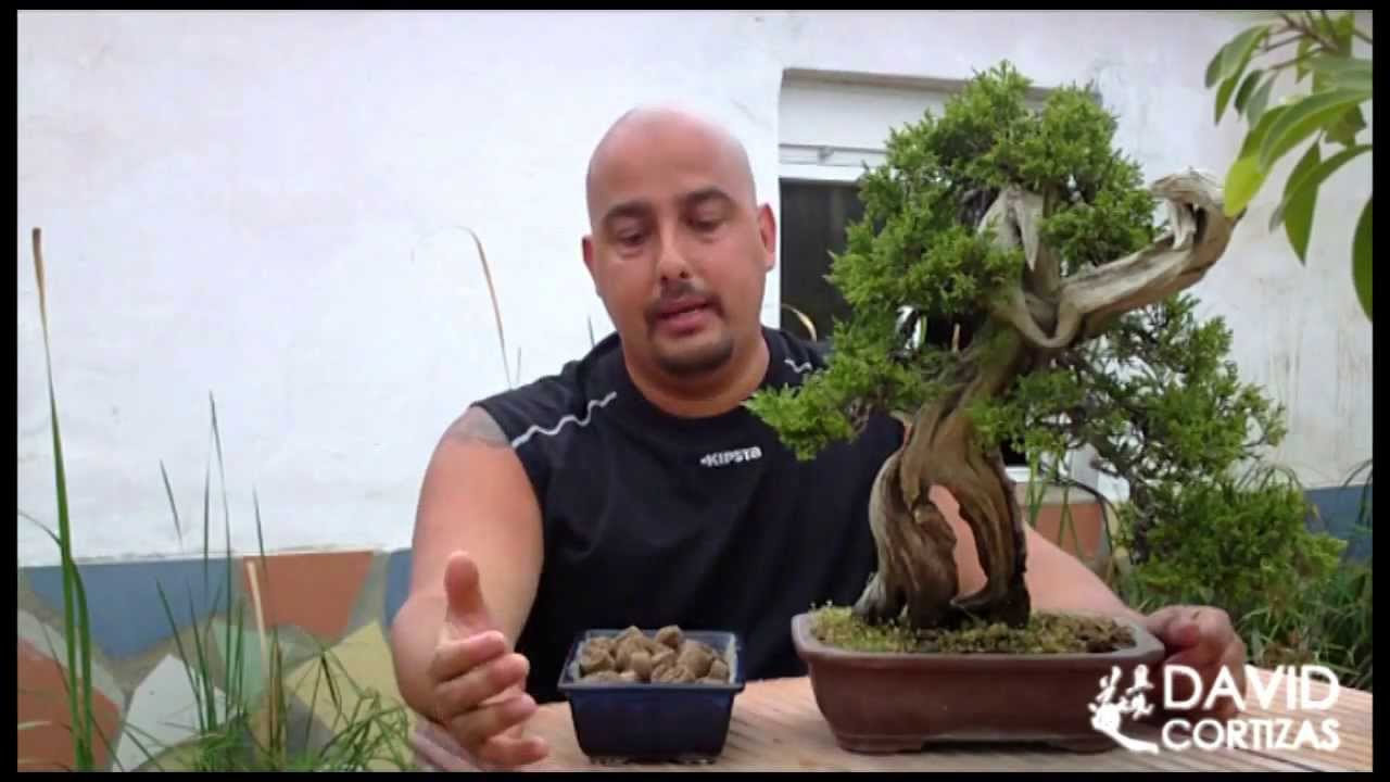 Escuela De Bonsai Online Abonado Youtube