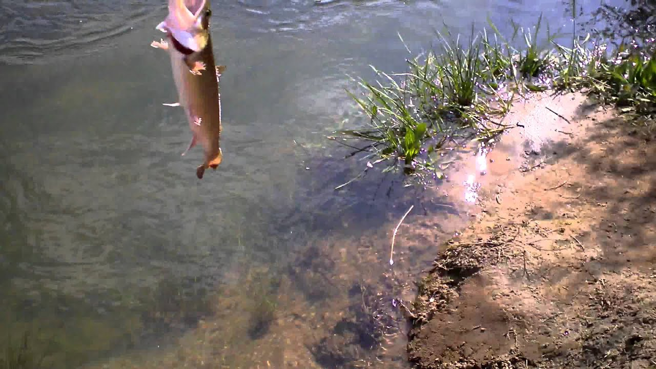 trout fishing tammen park blue ridge ga youtube