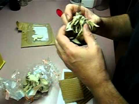 Running Maitake Mycelium on cardboard