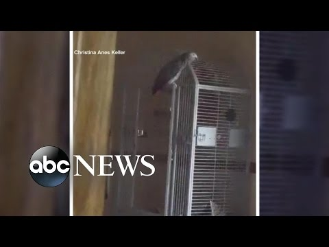 Talking Parrot Witness to Murder | Can the Bird be Used in Court?