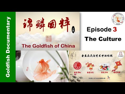 """Goldfish Of China 3 """"The Culture"""