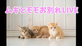 ムギとモモのお別れライブ thumbnail