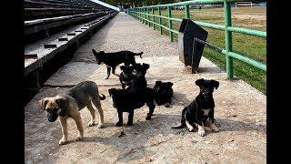 Щенки бродячей собаки