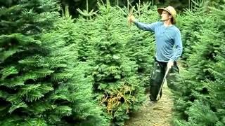 Весенняя ОБРЕЗКА ХВОЙНЫХ растений мастер класс(, 2013-01-20T08:14:57.000Z)
