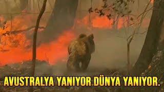 Avustralya yangınlarında potansiyel olarak 480 milyon hayvan öldü...
