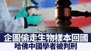 企圖偷走生物樣本 哈佛中國學者被判刑|@新聞精選【新唐人亞太電視】三節新聞Live直播 |20210109 - YouTube