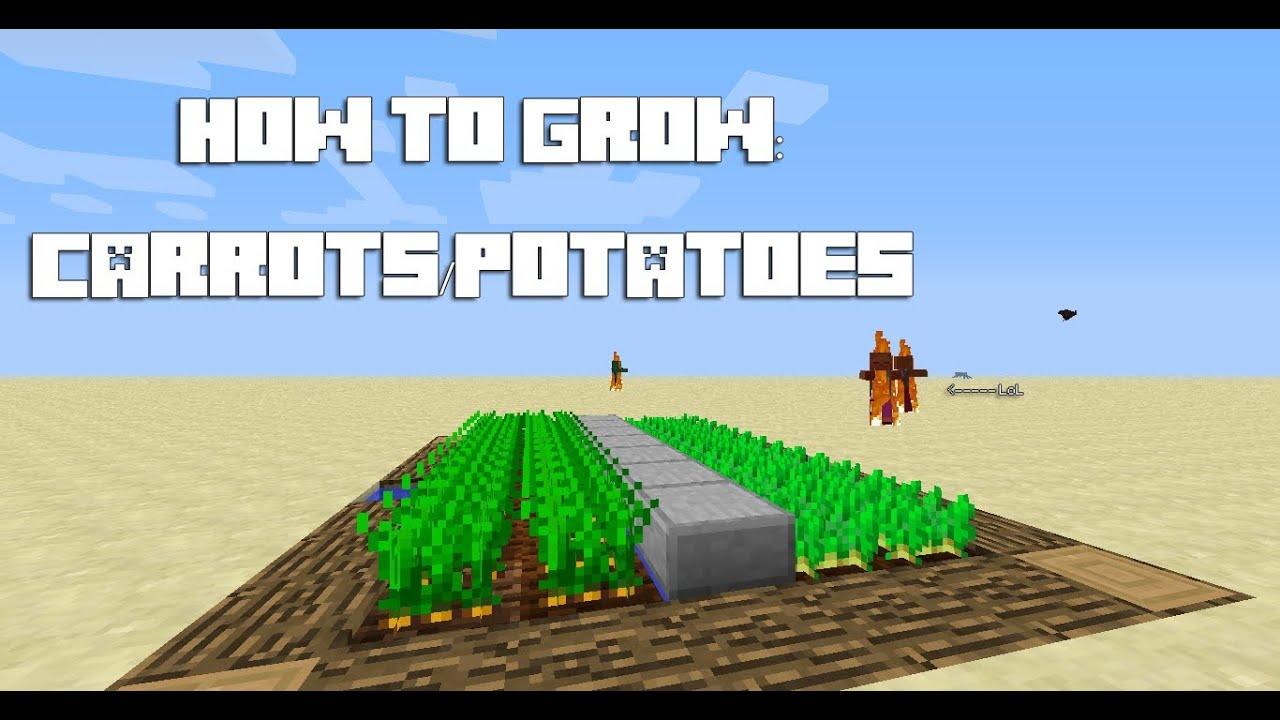 Minecraft Tutorial How To Grow Carrots Potatoes Youtube