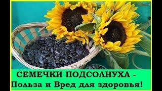 СЕМЕЧКИ ПОДСОЛНУХА - Польза и Вред для здоровья!