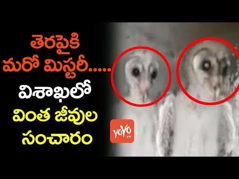 విశాఖలో వింత జీవులు | Strange Creatures Spotted at Under-Construction Building in Vizag | YOYO TV