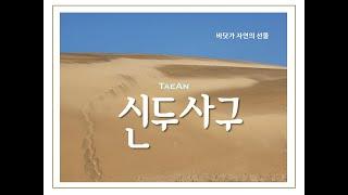 [태안] 신두리 해안사구/ Sindu Costal Sa…