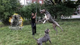 building a flirt pole part 1 muscles exercise pitbull bully exercise ripped