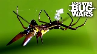 Crab Spider vs Spiny Orb Weaver | MONSTER BUG WARS