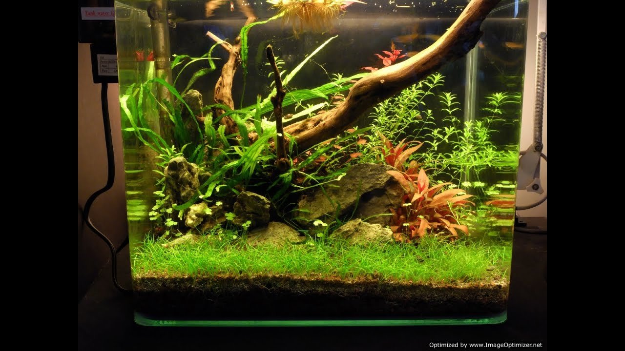 Nano Low Tech Planted Tank Youtube