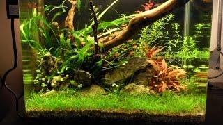 nano low tech planted tank