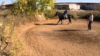 Верховая езда, в процессе обучения.