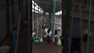 31.08.2018 .витебский приют для бездомных животных.