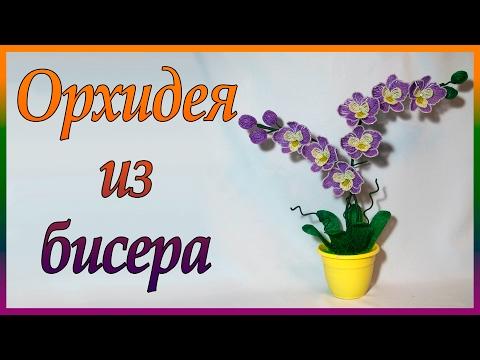 Домашняя орхидея фаленопсис Фото видов