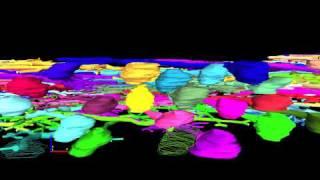 ニューロンの「森」を3Dで再構築