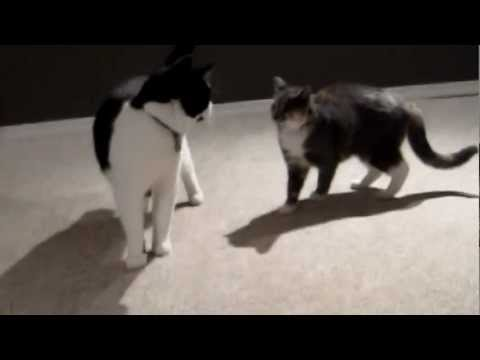 Resident Cat Meets Kitten for First Time