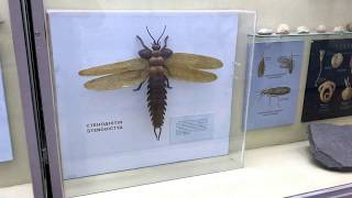 Giant ancient dragonfly