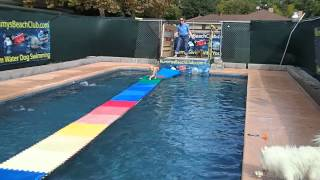 Cockapoo Cocker Spaniel Poodle Mix Jumps Off Dock And Runs On Swimming Pool Floats!