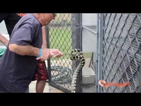 Australian Reptile Legend, Peter Krauss - CrittaCam