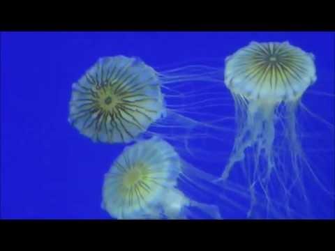 Atlanta - Georgia Aquarium, World of Coca-Cola, CNN... (parte 2)
