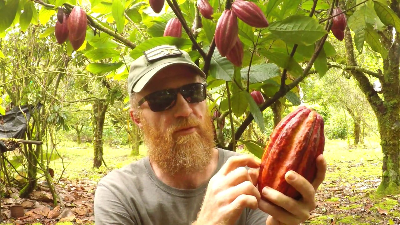 Making chocolate cacao tree to chocolate bar youtube making chocolate cacao tree to chocolate bar sciox Image collections