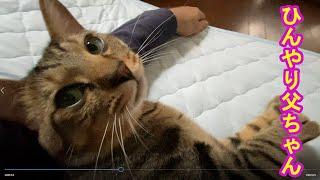 チコと父ちゃんとひんやりシーツ!ひんやりシーツでお昼寝するネコ