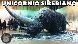 Video 10 Extinct Animals That Could Resurrect Soon download MP3, 3GP, MP4, WEBM, AVI, FLV Oktober 2018