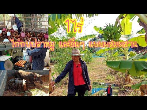 เกษตรผสมผสาน หมุนเวียน มีทุกอย่าง แค่ 1 ปี