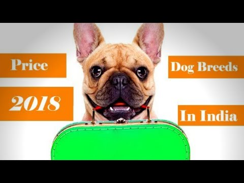 price or rate of   Popular dog breeds in India and surprise