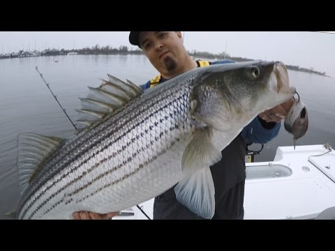 How To Catch Stripers With A Very Simple Rig That Makes A HUGE Difference! Striped Bass Fishing