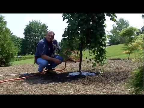 Pennsylvania Pride Watering Tips