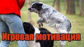 Как играть с собакой / How to play with dog?