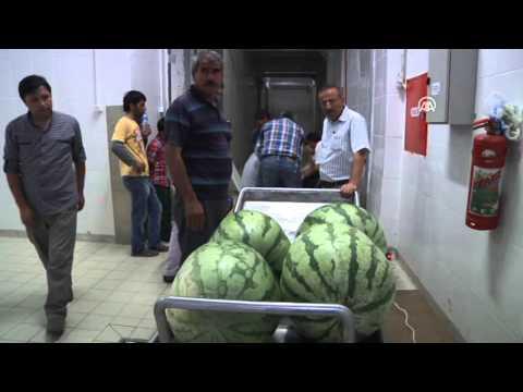 Anadolu Ajansı - Karpuzlar Görücüye çıkıyor
