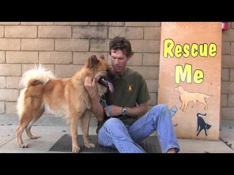 Rescue Me! 9-8-2014
